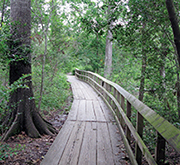A 2-mile trail within the Houston Arboretum