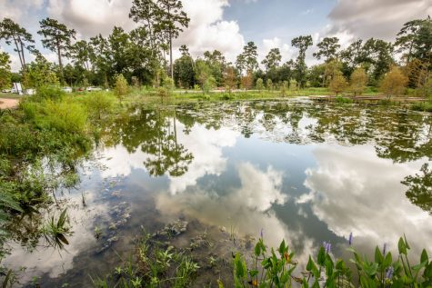 Image from Houston Arboretum and Nature Center